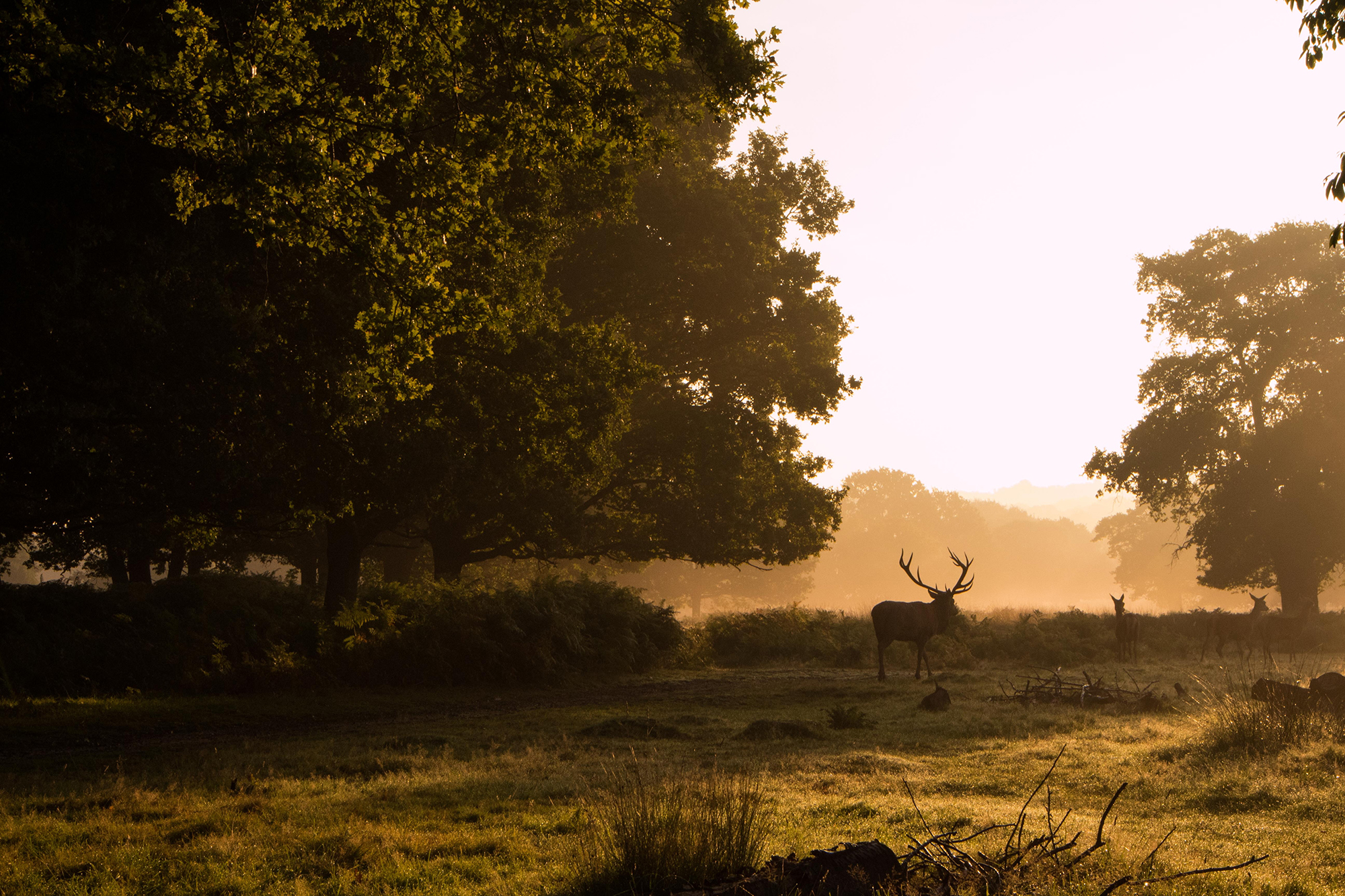 Nature and deer, Richmond Park